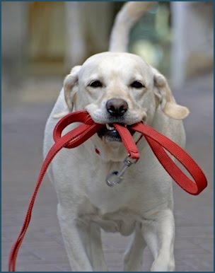 perro-paseando-solo